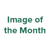 Image of the Month text.